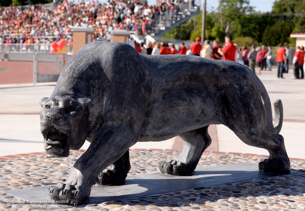 . A new Panther statue is unvieled during a celebration of the new Chico High School stadium Friday May 11, 2018.  (Bill Husa -- Enterprise-Record)