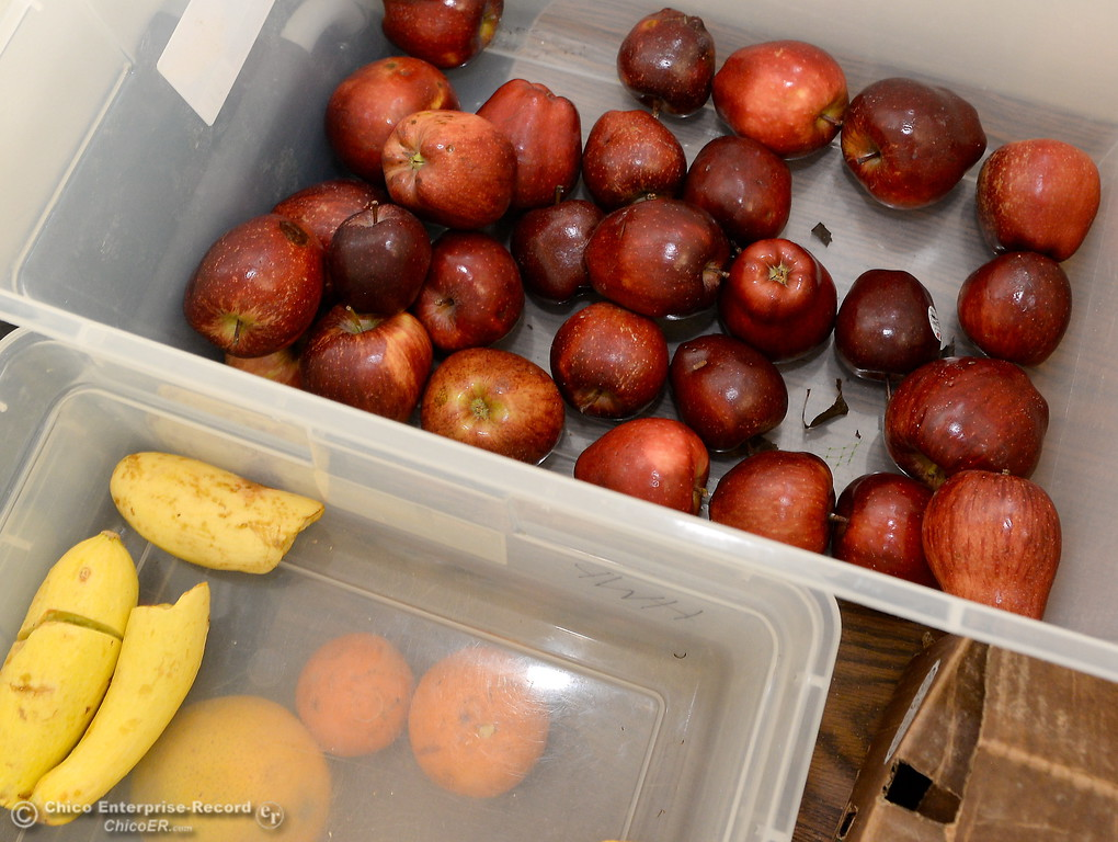 . Fresh fruits and vegetables are available to students at the Hungry Wildcat Food Pantry located at the Student Services Center room 196 on the CSUC campus Tuesday May 8, 2018. (Bill Husa -- Enterprise-Record)