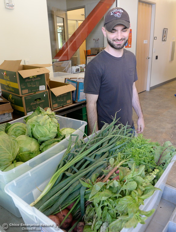 . Cal Fresh Outreach Intern Spencer Malugani comments at the fresh smelling basil as it arrives at the Hungry Wildcat Food Pantry located at the Student Services Center room 196 on the CSUC campus Tuesday May 8, 2018. (Bill Husa -- Enterprise-Record)