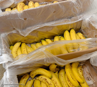 Fresh fruits and vegetables are available to students at the Hungry Wildcat Food Pantry located at the Student Services Center room 196 on the CSUC campus Tuesday May 8, 2018. (Bill Husa -- Enterprise-Record)