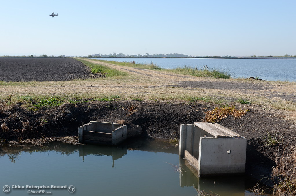 . Irrigation boxes between rice fields at Gorrill Ranch in Durham, Calif. Tues. May 23, 2017. (Bill Husa -- Enterprise-Record)
