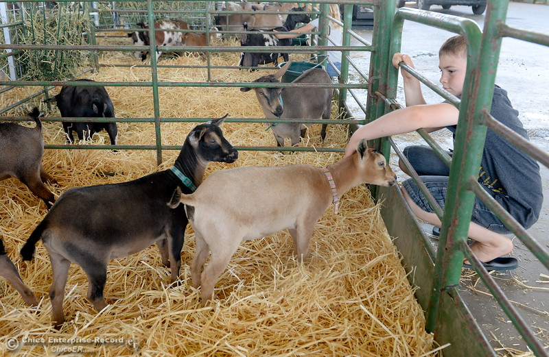 9-year-old Ryan Mallery of Paradise, Calif. pets some goats at the Silver Dollar Fair Tues. May 23, 2017. (Bill Husa -- Enterprise-Record)