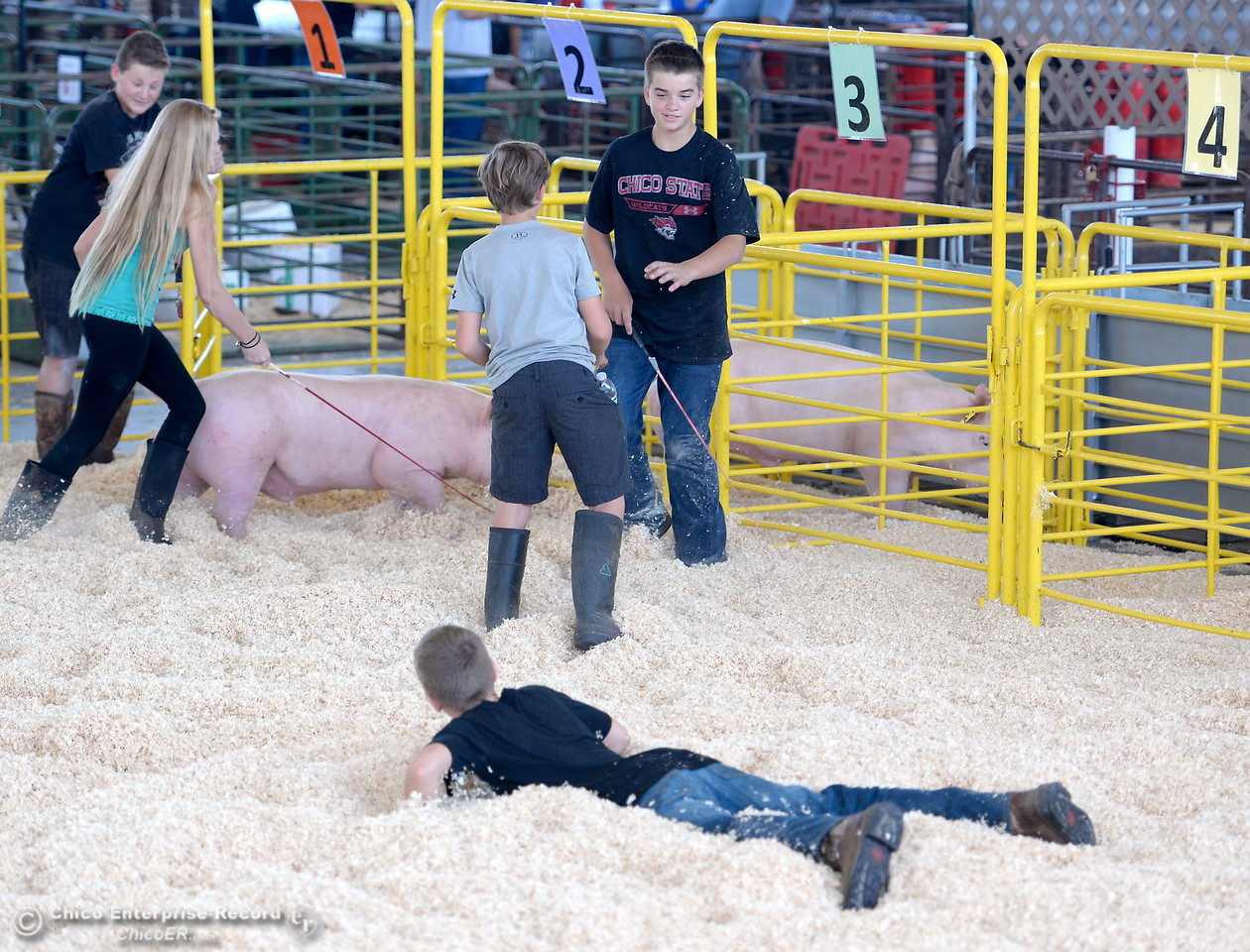 Brothers Gabe Garretson, 12 and Gavin Garretson 10 of Chico have some fun in the fresh shavings of the show ring at the Silver Dollar Fair Tues. May 23, 2017. (Bill Husa -- Enterprise-Record)