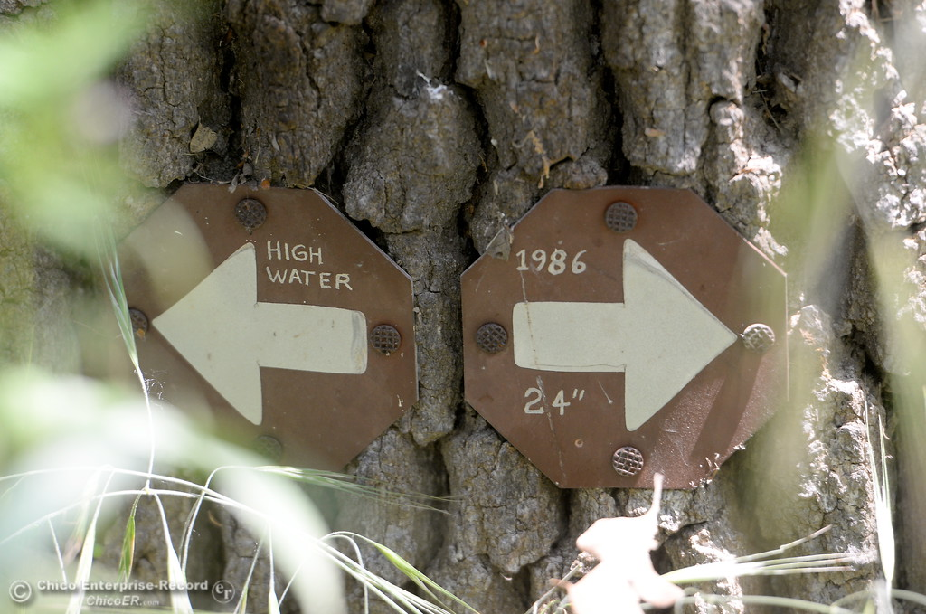. A sign showing a high water mark is seen posted on a tree along the Indian Fishery Nature Trail in Chico, Calif. Friday May 4, 2018. (Bill Husa -- Enterprise-Record)