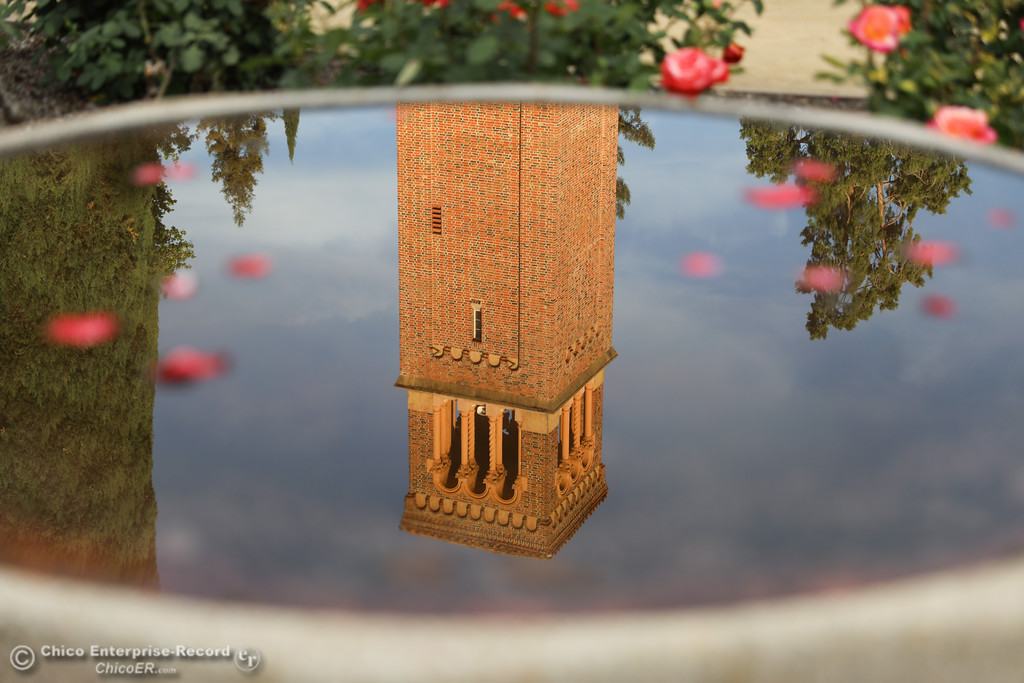 . Trinity Hall is reflected in the birdbath in the middle of the Rose Garden at Chico State University, May3, 2018,  in Chico, California. (Carin Dorghalli -- Enterprise-Record)