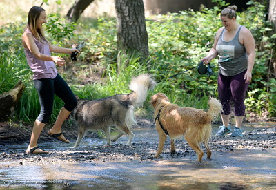 Marin Sanguinetti left and Michelle Parsons cool off with their dogs Newt and Nahla in Big Chico Creek near the Hwy. 99 bridge in Bidwell Park in Chico, Calif. Wed. June 14, 2017. (Bill Husa -- Enterprise-Record)