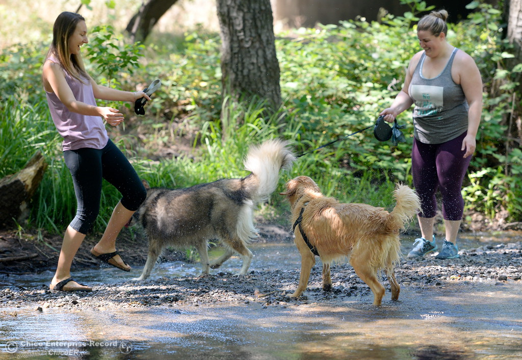 . Marin Sanguinetti left and Michelle Parsons cool off with their dogs Newt and Nahla in Big Chico Creek near the Hwy. 99 bridge in Bidwell Park in Chico, Calif. Wed. June 14, 2017. (Bill Husa -- Enterprise-Record)