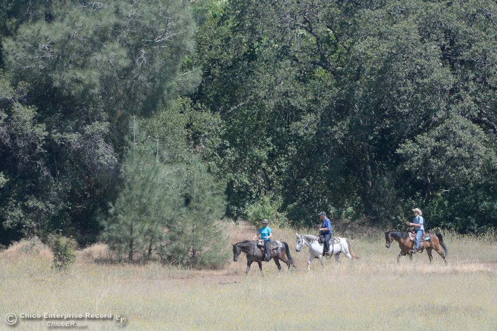 . A group of riders on horseback seen on the Middle trail in Upper Bidwell Park in Chico, Calif. Tues. June 13, 2017. The idea of a linked, non-motorized trail system in California has been discussed for years, but the idea gained momentum last month during a firety-ever conference held in Chico.(Bill Husa -- Enterprise-Record)