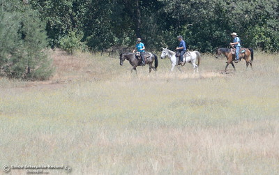 A group of riders on horseback seen on the Middle trail in Upper Bidwell Park in Chico, Calif. Tues. June 13, 2017. The idea of a linked, non-motorized trail system in California has been discussed for years, but the idea gained momentum last month during a firety-ever conference held in Chico.(Bill Husa -- Enterprise-Record)