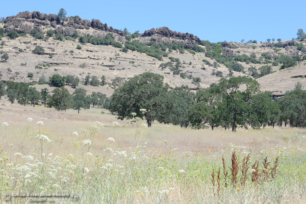 . Upper Bidwell Park in Chico, Calif. Tues. June 13, 2017. The idea of a linked, non-motorized trail system in California has been discussed for years, but the idea gained momentum last month during a firety-ever conference held in Chico.(Bill Husa -- Enterprise-Record)