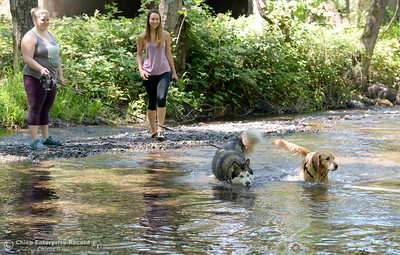 Michelle Parsons, left and Marin Sanguinetti cool off with their dogs Newt and Nahla in Big Chico Creek near the Hwy. 99 bridge in Bidwell Park in Chico, Calif. Wed. June 14, 2017. (Bill Husa -- Enterprise-Record)