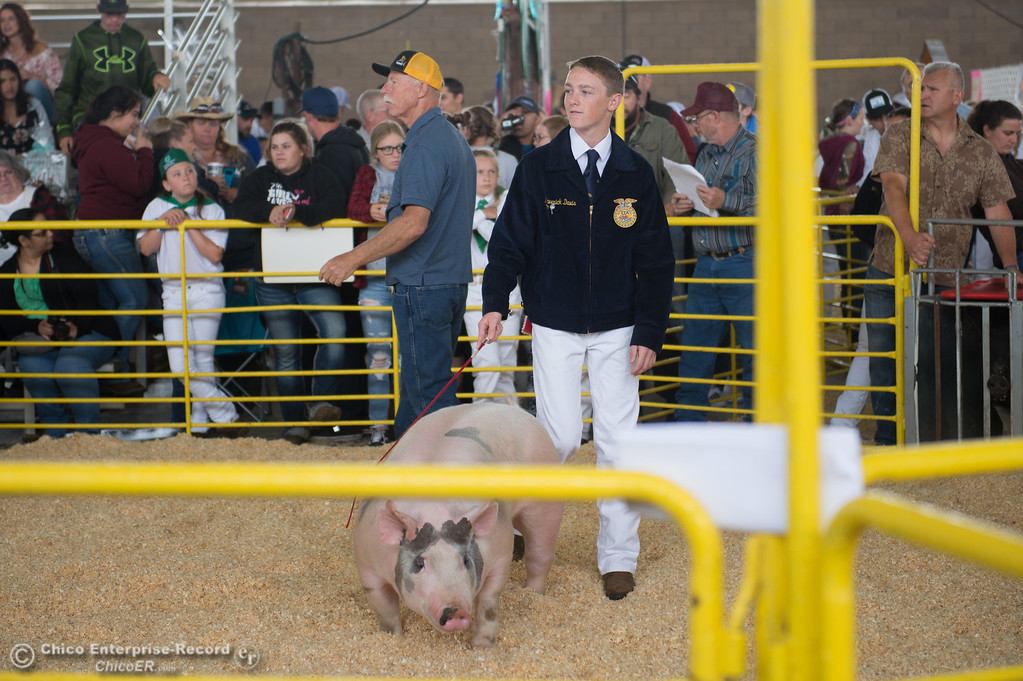 . Maverick Davis guides a pig during the Junior Livestock Auction, May 26, 2018,  in Chico, California. (Carin Dorghalli -- Enterprise-Record)