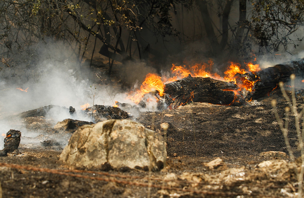 . A fallen tree engulfed by flames as Cal Fire Butte County and other agencies work to contain the Wall Fire Saturday July 8, 2017 in Oroville, California.  (Emily Bertolino -- Enterprise-Record)
