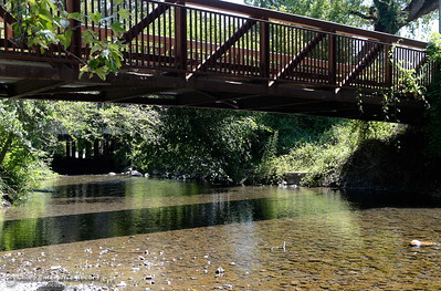 Big Chico Creek has slowed to a low flow as temperatures rise in Chico, Calif. Monday, July 9, 2018. (Bill Husa -- Enterprise-Record)