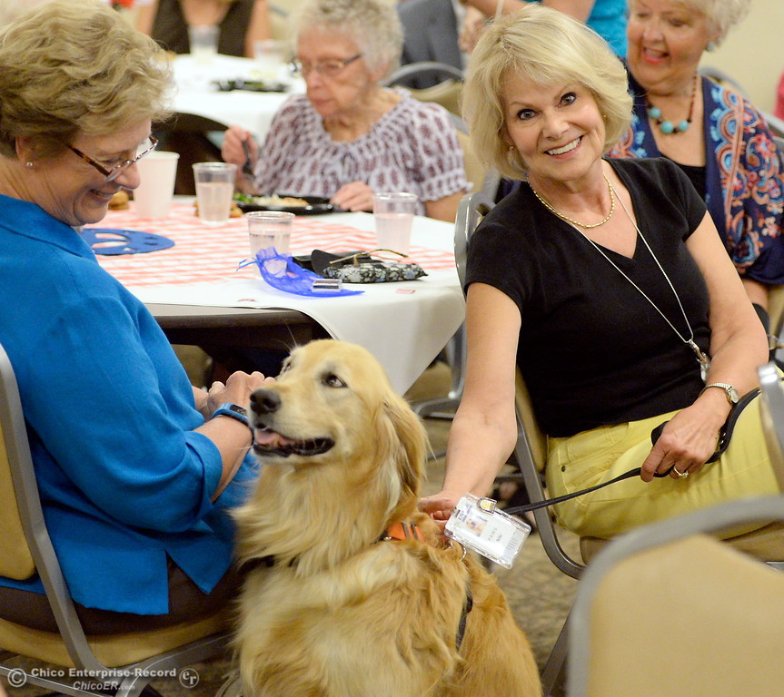 . Niki, a service dog owned by Irish McNeil at right, is honored for 5-years of service during a meeting at the Enloe Conference Center in Chico, Calif. Thurs. July 13, 2017. (Bill Husa -- Enterprise-Record)