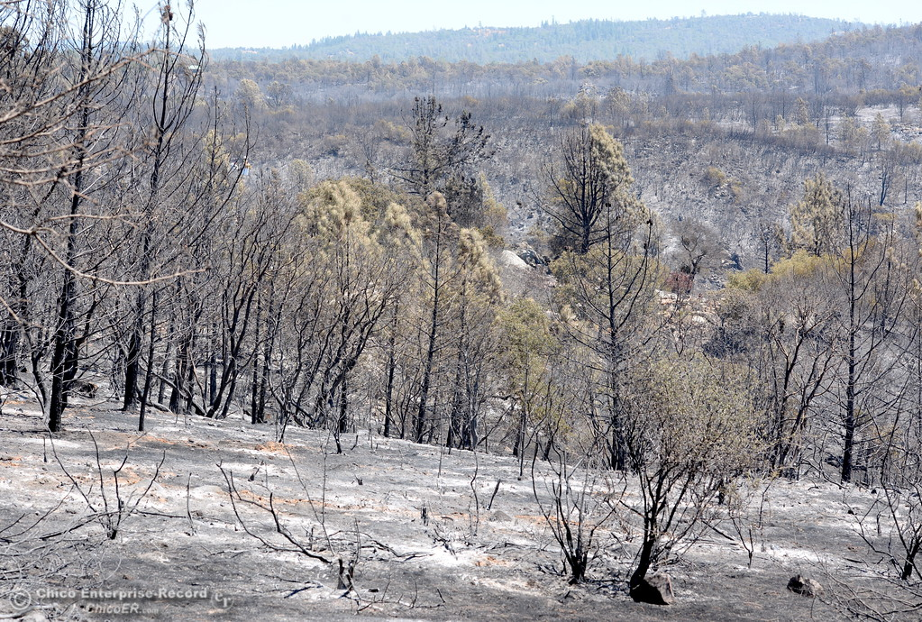 . 5,600 acres have burned during the Wall Fire near Oroville, Calif. Mon. July 10, 2017. (Bill Husa -- Enterprise-Record)