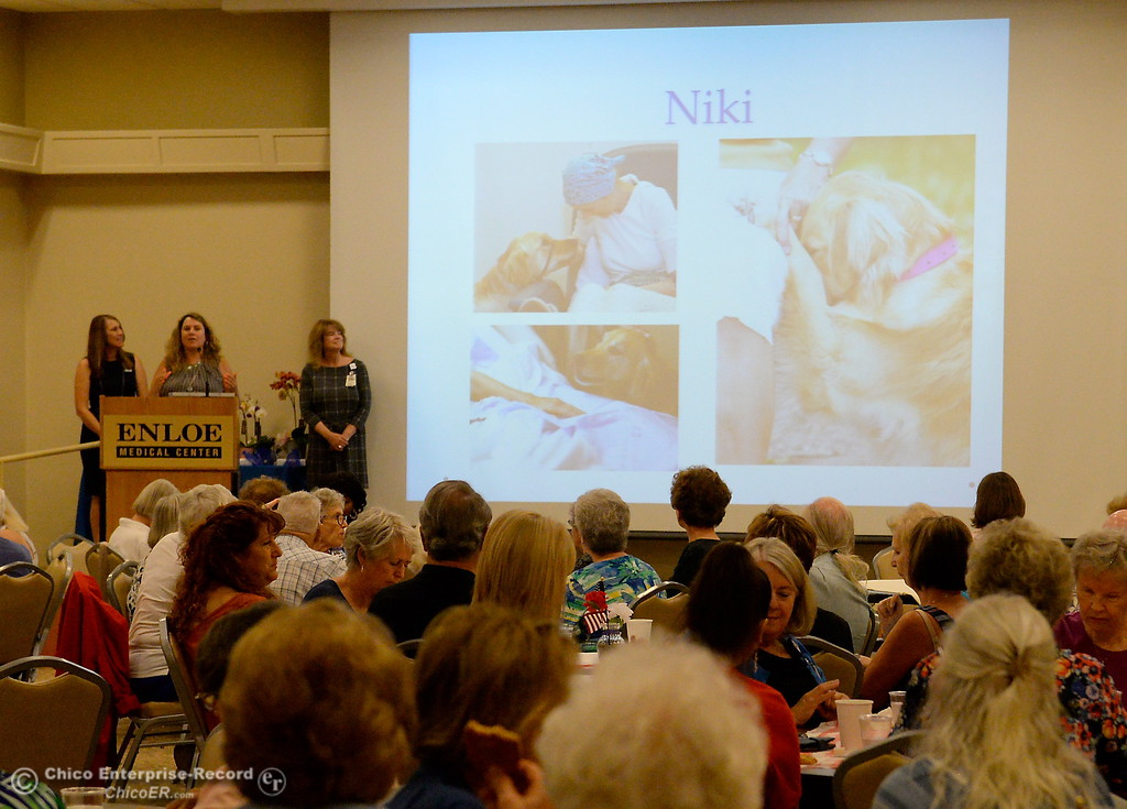 . Photos of Niki, a service dog owned by Irish McNeil is shown on screen as she is honored for 5-years of service during a meeting at the Enloe Conference Center in Chico, Calif. Thurs. July 13, 2017. (Bill Husa -- Enterprise-Record)
