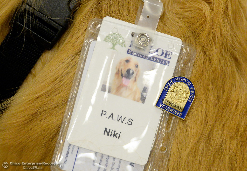. Niki, a service dog owned by Irish McNeil proudly wears her 5-year Volunteer pin as she is honored for 5-years of service during a meeting at the Enloe Conference Center in Chico, Calif. Thurs. July 13, 2017. (Bill Husa -- Enterprise-Record)