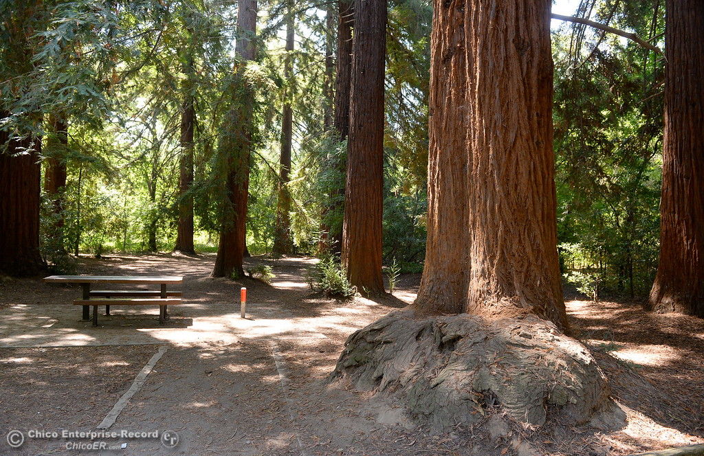 . This Redwood grove in Bidwell Park is a great place to cool off on a hot summer day in Chico, Calif. Thurs. July 20, 2017.(Bill Husa -- Enterprise-Record)