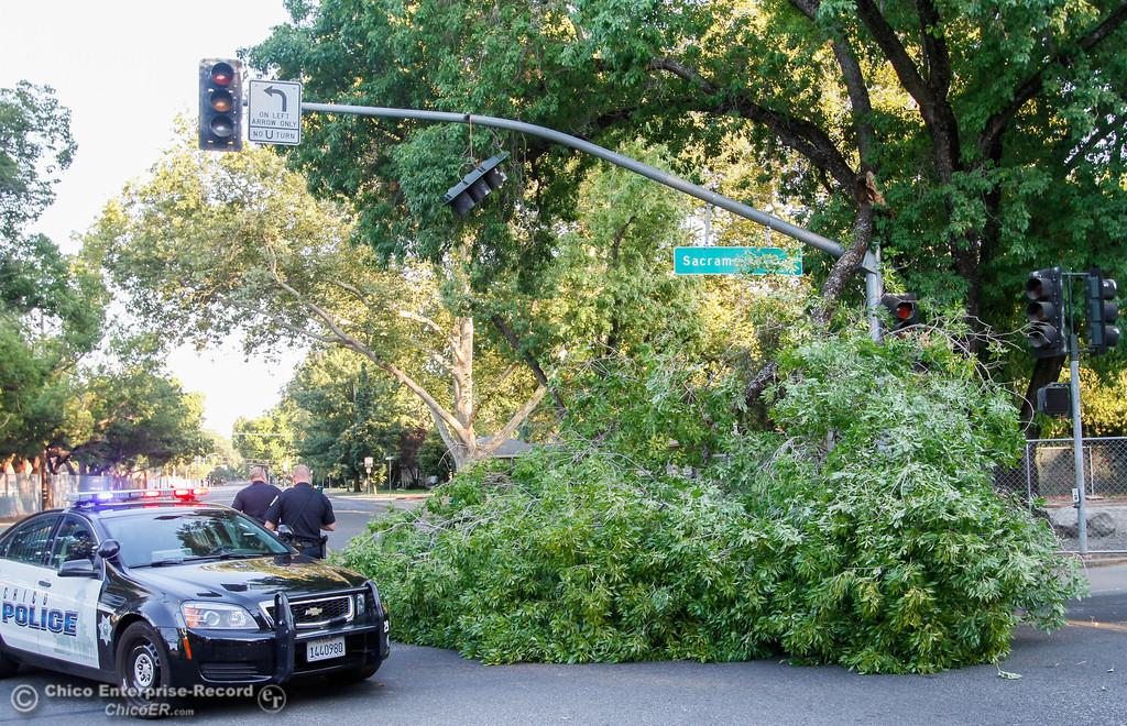 . A big tree limb blocks Warner Street at West Sacramento Tuesday July 25, 2017 in Chico, California. (Emily Bertolino -- Enterprise-Record)