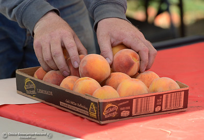 Kevin Renker laods a shallow box with peaches for a customer as ripe peaches are plucked form fruit-laden trees Tuesday, Aug, 2, 2016, as the Chico State Universtiy Farm in Chico, California, opens its orchards to the public for peach picking at $1.50 per pound. (Dan Reidel -- Enterprise-Record)