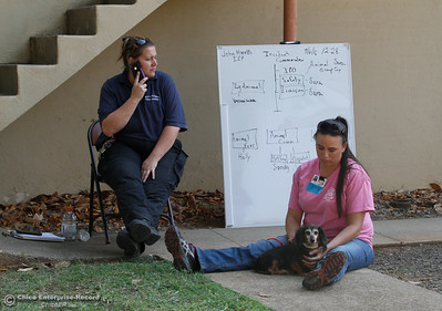 Meanwhile, Amy Jernigan watches over 14-year old Molly who has taken refuge in the small animal shelter September 6, 2016 at in Oroville, Calif. With evacuations measures off people being reunited with their pets today. (Emily Bertolino -- Enterprise-Record)