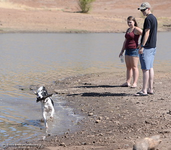 A wet dog is a happy dog as Petey, a border collie mix owned by Jake Krzaczek of Chico and Natalie Allen of Chico enjoys a swim at Horseshoe Lake in Upper Bidwell Park in Chico, Calif. Mon. Aug. 28, 2017.  (Bill Husa -- Enterprise-Record)