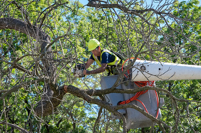 Forestry Crew Removes and Preserves Historic Street Tree at National Susan B. Anthony Museum and House