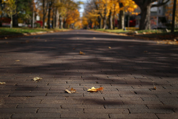 Record-Eagle/Keith King<br /> Leaves lie on Sixth Street Thursday, November 3, 2011 in Traverse City.