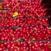 Record-Eagle/Jan-Michael Stump<br /> Send Farms shaker operator Theron Coleman harvests tart cherries in Bingham Township on Tuesday morning.