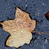 Spec Rain Leaf