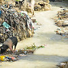 Photo courtesy of Jared Kohler<br /> A pig and goats rummage through garbage that fills a waterway near Port au Prince, Haiti
