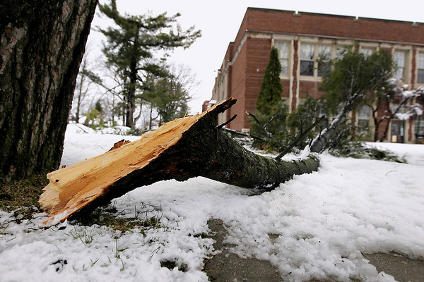 Record-Eagle/Keith King<br /> A broken branch lies on the ground Wednesday, April 20, 2011 outside Central Grade School.