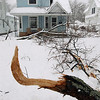 Record-Eagle/Keith King<br /> Fallen tree branches lie in the front yard Saturday, March 3, 2012 of a house in Traverse City.