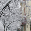 Record-Eagle/Keith King<br /> Snow accumulates on trees Tuesday, January 17, 2012 along East Front Street in downtown Traverse City.