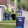 Record-Eagle/Keith King<br /> A black bear travels through an alley Sunday, May 29, 2011 in Traverse City.