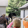 Record-Eagle/Keith King<br /> A black bear climbs over a fence Sunday, May 29, 2011 near houses along Second Street in Traverse City.