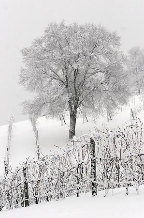 Record-Eagle/Douglas Tesner<br /> No. 7: 2008-09 winter pummels region