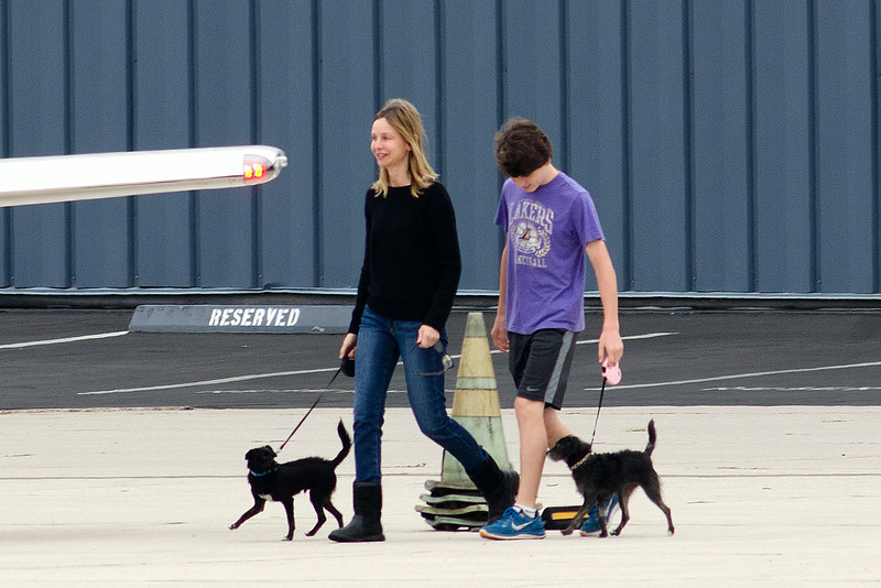 News dogs for Harrison Ford,Calista and Liam