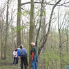 Richard Payerchin - The Morning Journal <br> Grant Thompson, right, chief naturalist for Lorain County Metro Parks, and hiker Gary Pressnell of Elyria look at an ash treet at Elywood Park on May 1, 2016. About 50 people participating in the annual Spring Walk, a collaborative program of Lorain County Metro Parks, Friends of Cascade Park and the Lorain County Historical Society. Thompson noted that tree did not have many signs of infestation by emerald ash borer, an insect harmless to people but that has killed ash trees in Ohio and other states.