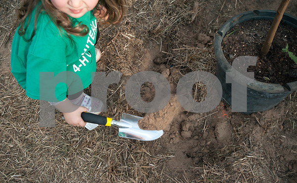 Asa Morgan, 2, of Tyler, helps dig a hole to plant a bur oak tree at Smith County Juvenile Services in Tyler Friday Oct. 9, 2015. The tree planting event was hosted by Smith County 4-H as part of National 4-H Week celebrating the 100th anniversary of 4-H.   (Sarah A. Miller/Tyler Morning Telegraph)