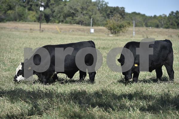 Iron Farms