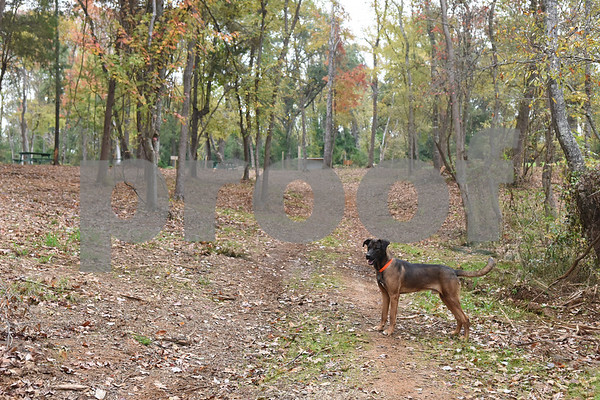 The walking trail at Trail Creek Farm Lindale is pictured Tuesday Nov. 22, 2016. Trail Creek Farm is a Christmas tree farm that also offers family activities such as a zip line, picnic areas and bounce houses.  (Sarah A. Miller/Tyler Morning Telegraph)