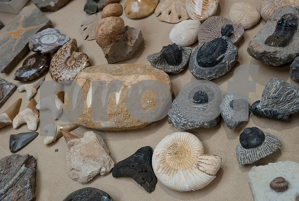 Fossils are on display at the East Texas Gem and Mineral Society's 22nd annual jewelry, rock, mineral and fossil show at the Tyler Rose Garden Center on January 26, 2018. The show continues through Jan. 28.  (Sarah A. Miller/Tyler Morning Telegraph)