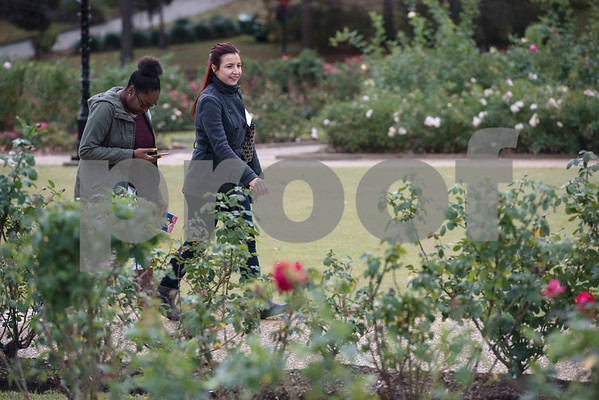 """Cairo Sanders and Jessica Kudlacek of Staybridge Suites tour the Tyler Rose Garden during a tour of Tyler during the """"Keepin' Tyler Rosy"""" Destination Training held by the Tyler Chamber of Commerce on Thursday Dec. 7, 2017. The program is a training event designed to educate front line staff from local businesses on what Tyler has to offer to their clients and visitors as well as customer service training.  (Sarah A. Miller/Tyler Morning Telegraph)"""