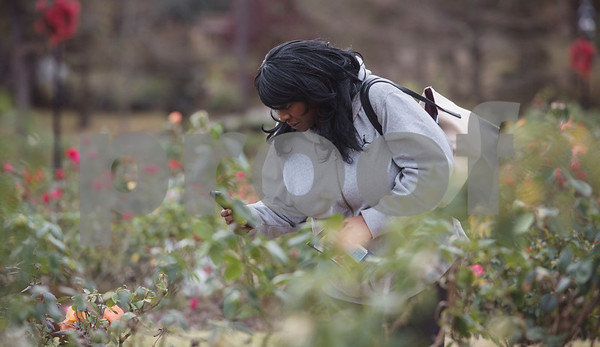 """Andrea Randle of the Magnuson Grand Hotel and Conference Center tours the Tyler Rose Garden as part of the """"Keepin' Tyler Rosy"""" Destination Training held by the Tyler Chamber of Commerce on Thursday Dec. 7, 2017. The program is a training event designed to educate front line staff from local businesses on what Tyler has to offer to their clients and visitors as well as customer service training.  (Sarah A. Miller/Tyler Morning Telegraph)"""