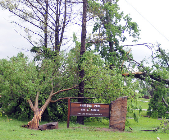 Trees in Andrews Prk sustained heavy damage Friday, April 13, 2012, downed after a tornado skipped through Norman. Photo by Jerry Laizure