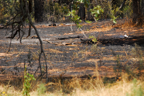 A field behind a house on 120th Ave. SE, just south of E. Etowah Rd. in Slaughterville, is scorched after a grass fire burned the area Friday afternoon.  About 20 acres burned before firefighters were able to get it under control.  There were no structures damaged in the blaze.<br /> Kyle Phillips/The Transcript