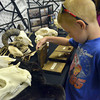 Ryan Mitchell, 7, looks at samples from the Museum of Osteology Friday afternoon during the Norman Public Library's Summer Read Program.  During the event community organizations explained activities they have available for children and families during the summer. Children  were also able to sign up for the Children's Summer Reading Program at the library.<br /> Kyle Phillips/The Transcript