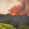 A fire burns in the trees Friday afternoon as a wild fire streaks across South Cleveland County<br /> Kyle Phillips/The Transcript